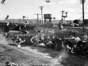 Racing pigeons being released at Cockle Creek, Lake Macquarie NSW, on June 26, 1941.