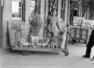 Soldier with shrubs. Said to be Ingleburn Railway Station. Circa 1940.