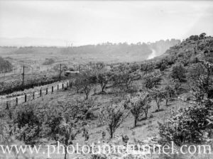 Orchards near the railway line, Cardiff, NSW, October 1, 1936.