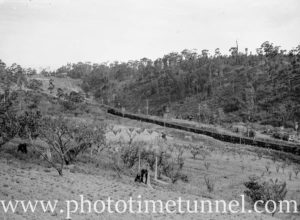 Orchards near the railway line, with a coal train passing. Cardiff, NSW, October 1, 1936.