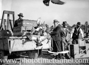 Racing pigeons at Back to Wallsend (Newcastle, NSW) celebrations, October 26, 1935. (4)