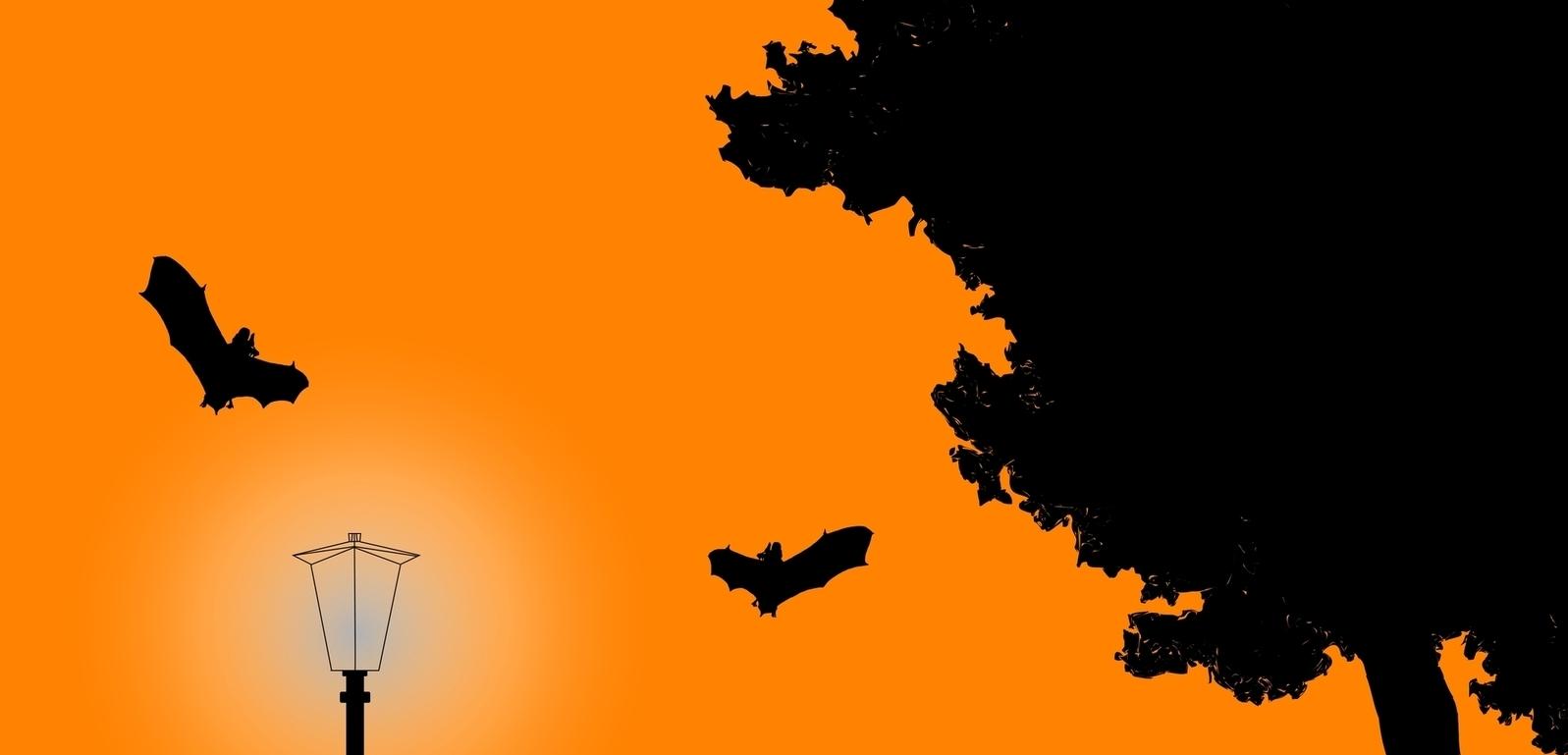 Bats, viruses, immunity and Covid-19