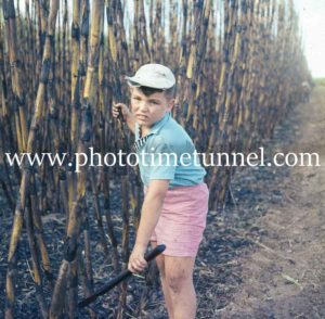 Young boy, part of cane-cutting team near Ingham, Queensland, circa 1960s. (2)