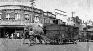 Wirth's Circus elephants in Katoomba, NSW, circa 1930s.