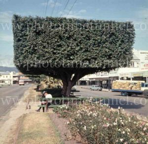 Street scene with topiary in Cairns, Queensland, 1960s.