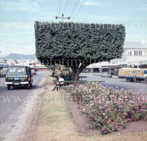 Street scene with topiary in Cairns, Queensland, 1960s. (2)