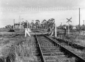 Railway level crossing at Blackalls Park, NSW, January 27, 1966.