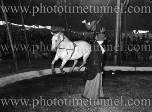 Horse in the ring at Wirth's Circus, Newcastle, NSW, May 1945.